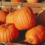 Fall Festival at Salubria – October 19