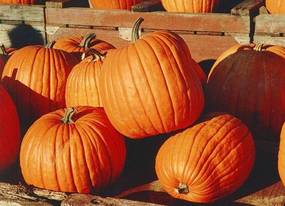 Fall Festival at Salubria – October 19