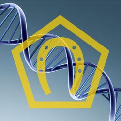 Germanna DNA Project